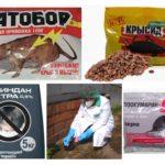 Chemie van ratten