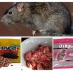 Rattenchemicaliën