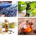 Essentiële oliën van mieren