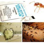 Ant uitroeiing thuis