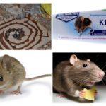 Lijm voor muizen
