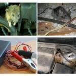 Ratten in de auto
