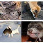Dieren die muizen eten