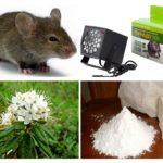 Methoden voor het omgaan met muizen