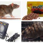 Methoden voor het omgaan met ratten