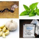Mieren controlemethoden