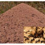 Het uiterlijk van de mierenhoop