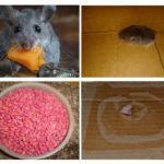 Muizen in de garage