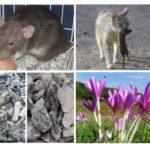 Fondsen van ratten