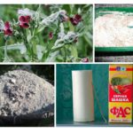 Folk remedies voor muizen
