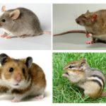 Verschil van een muis van andere dieren
