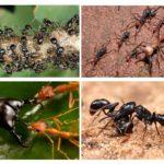 Mieren leven