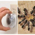 Insectenverdelger