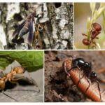 Voedsel voor insecten in de natuur