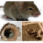 Isolatie knagende muizen