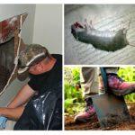 De zoektocht naar de rat onder de vloer
