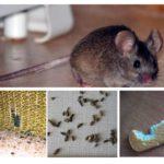 De aanwezigheid van muizen in het appartement