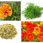 Planten van ongedierte