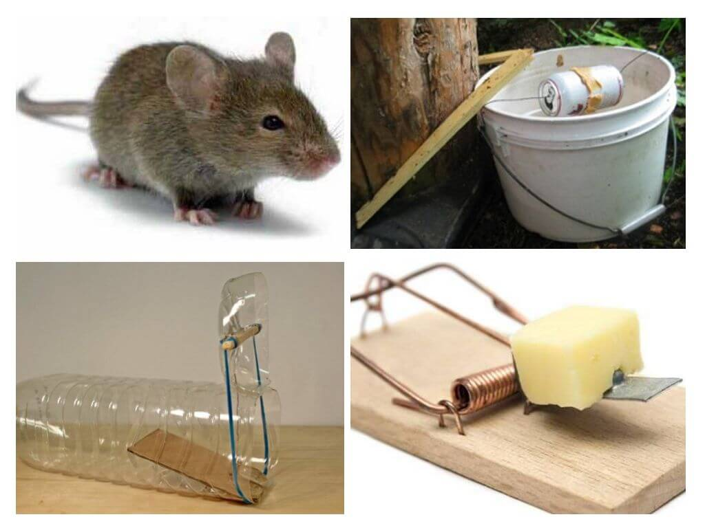 Mouse Trap Types
