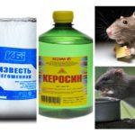 Fondsen van ratten en muizen