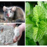 Folk remedies voor muizen