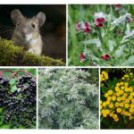 Afstotende planten