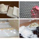 Bescherm schuim tegen muizen