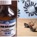 Ammoniak van mieren
