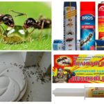 Middel om mieren te bestrijden
