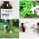 Het gebruik van ammoniak in de tuin