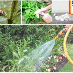Insectenbeheersingsmethoden