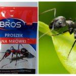 Betekent gooien mieren