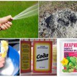 Verschillende manieren om met bladluizen om te gaan