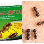 Betekent Fas-Double van mieren