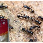 Thunder 2 van mieren