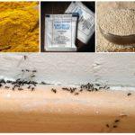Folkmedicijnen voor mieren