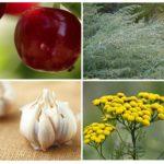 Insectenuitstoting door geur