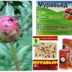 Het gebruik van pesticiden