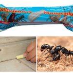 Potlood Masha om de mieren te bestrijden