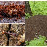 Mierenhoop en mieren