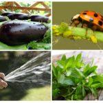 Manieren om bladluizen te bestrijden
