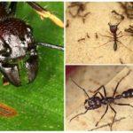 Ant-kogel