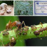 Planten in de strijd tegen insecten