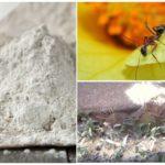 Toepassing Fas dubbel van insecten