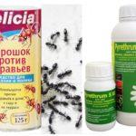 Mierenpoeder