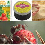 Giftig aas voor mieren