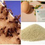 Volksrecepten voor de strijd tegen mieren