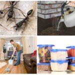 Voorkom het verschijnen van mieren