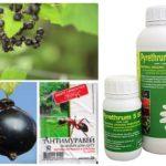 Professionele ant-producten