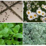 Mieren Controleplanten